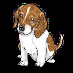 beagle-graphic-image