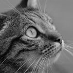 black-and-white-cat--profile-green-eyes-image