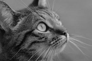 black-white-cat-side-image