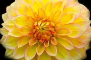 1-800-flowers-image