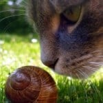 snail-cat-sniff-image