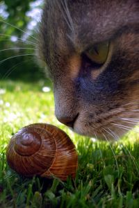 snail-cat-sniff-image