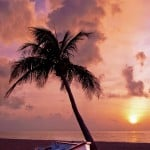 palm-tree-sunset-image
