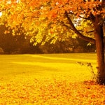 autumn-tree-leaves-yellow-image