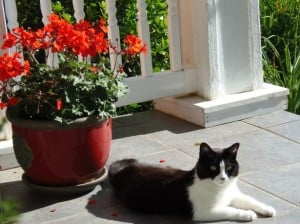 cat-lounging-on-porch-image