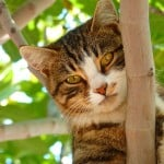 cat-peeking-from-behind-tree-branches-image