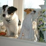 jack-russell-on-window-ledge-image