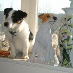 jack-russell-on-window-ledge-image