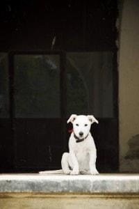 dog-in-doorway-image