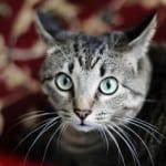 bright-eye-cat-image