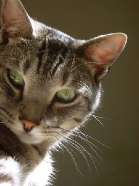 tabby-cat-over-the-shoulder-look-image