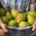 apples-in-blue-apron-image