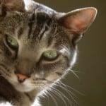 who-me-feline-image