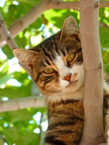 cat-fork-of-tree-image