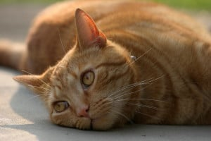 beguiling-cat-image
