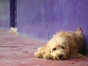dog-sleeping-sidewalk-purple-background-image