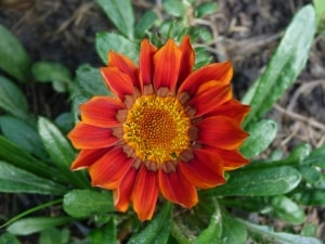 red-flower-closeup-petals-image