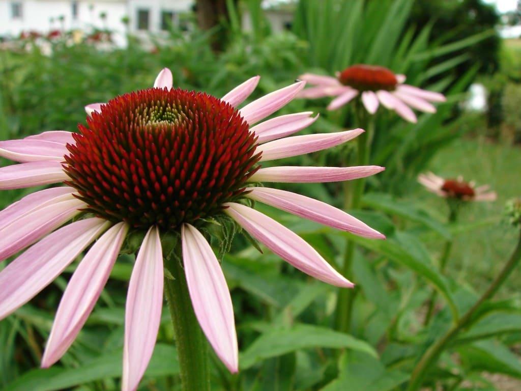 pink-close-up-spikey-flower-image