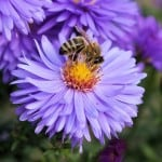 purple-flower-bee-image