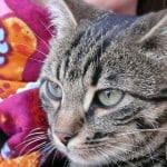 cat-on-colorful-blanket-image