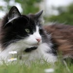 lounging-black-white-cat-grass-image