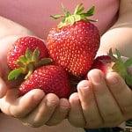handful-strawberries-image
