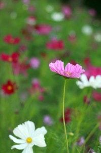 wildflower-field-image