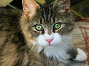 green-eye-bright-eye-cat-image
