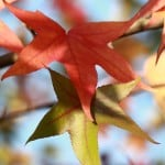 orange-green-yellow-fall-leaves-image
