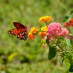 orange-butterfly-perched-yellow-flower-image