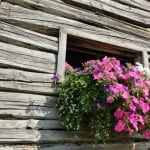 flowers-in-window-cabin-image