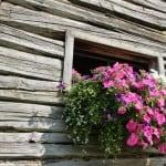 flowers-in-window-cabin-image