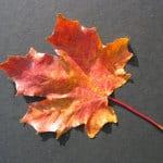 fall-leaf-single-image