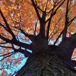 fall-sky-orange-leaves-image