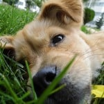 dog-nose-in-grass-image
