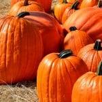 load-of-pumpkins-image