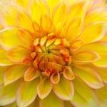 big-yellow-closeup-image