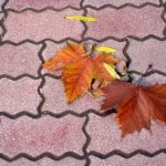 leaves-on-patterned-sidewalk-image