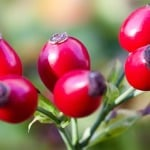 beautiful-red-berries-image