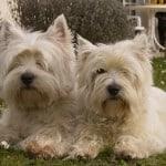 doggie-twins-image