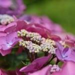 purple-white-flowers-garden-image