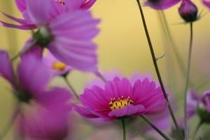 blur-purple-flowers-image