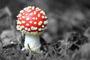 red-polka-dot-toadstool-image