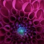 big-purple-bloom-image