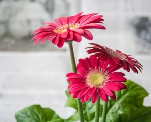 work-at-home-three-flowers-image