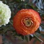 dark-white-and-orange-flowers-garden-image