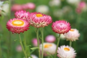 field-of-pink-yellow-white-green-image