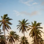tropical-palm-trees-image